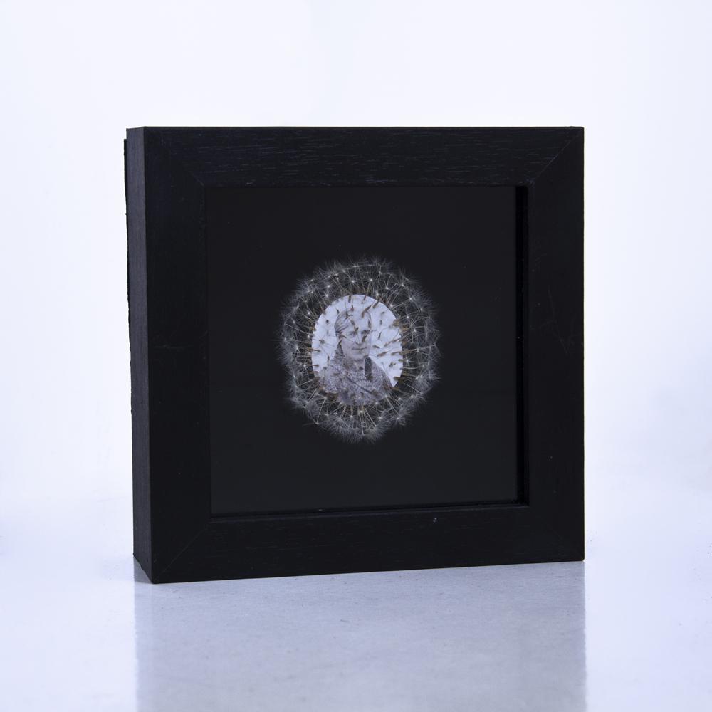 Déjame volar, 01. Vitrina de 15 x 15 cm. Semillas de dientes de león y fotografía. 2013