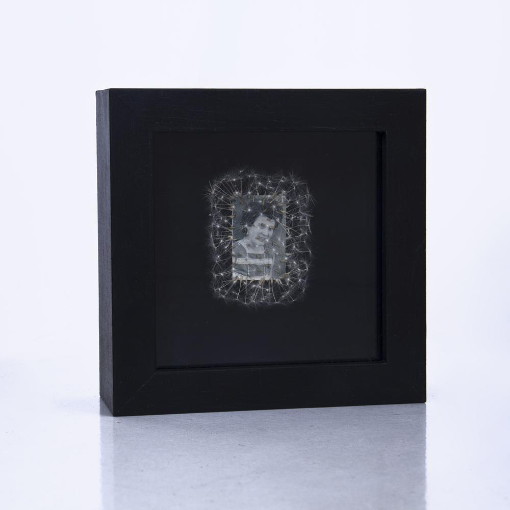 Déjame volar, 02. Vitrina de 15 x 15 cm. Semillas de dientes de león y fotografía. 2013